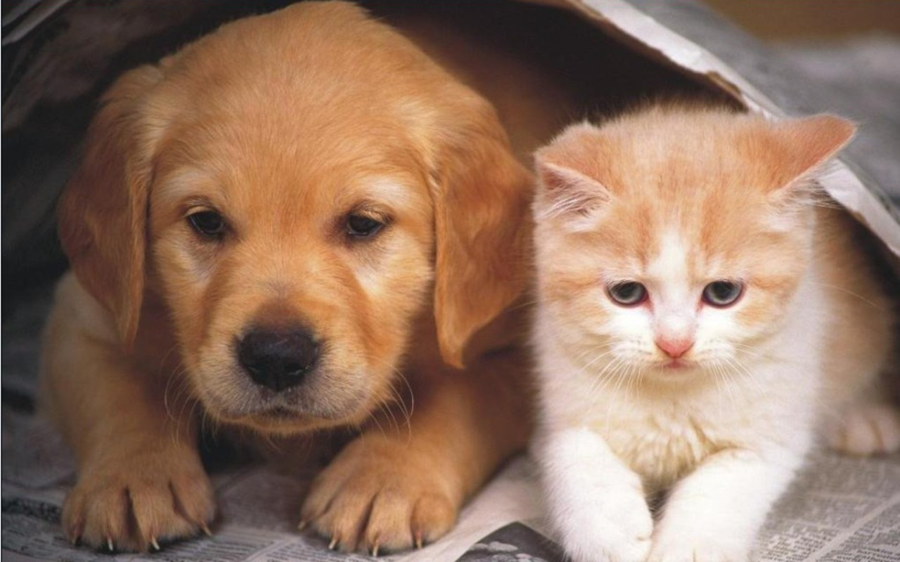 Pet's Emergency Kits